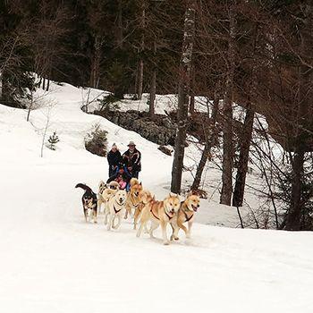 Sport Aventure Annecy chien de traineau
